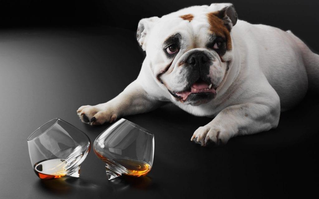 Liqueur & Cognac Glass - 2 pcs-22497